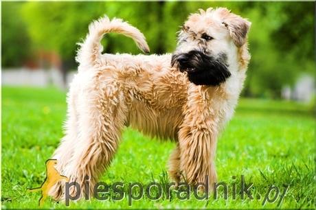 Gumtree Dog Kennel For Sale Scotland